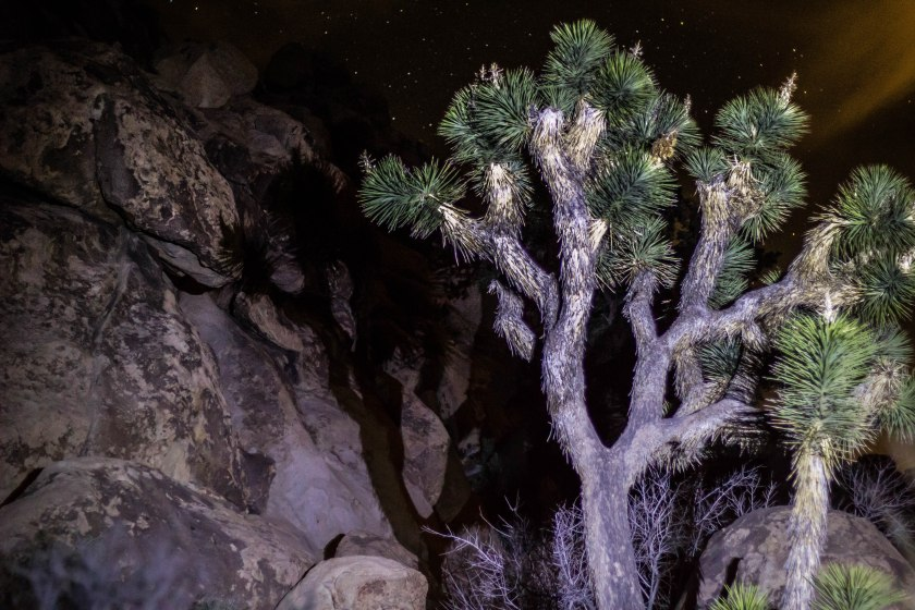 paranormal joshua tree